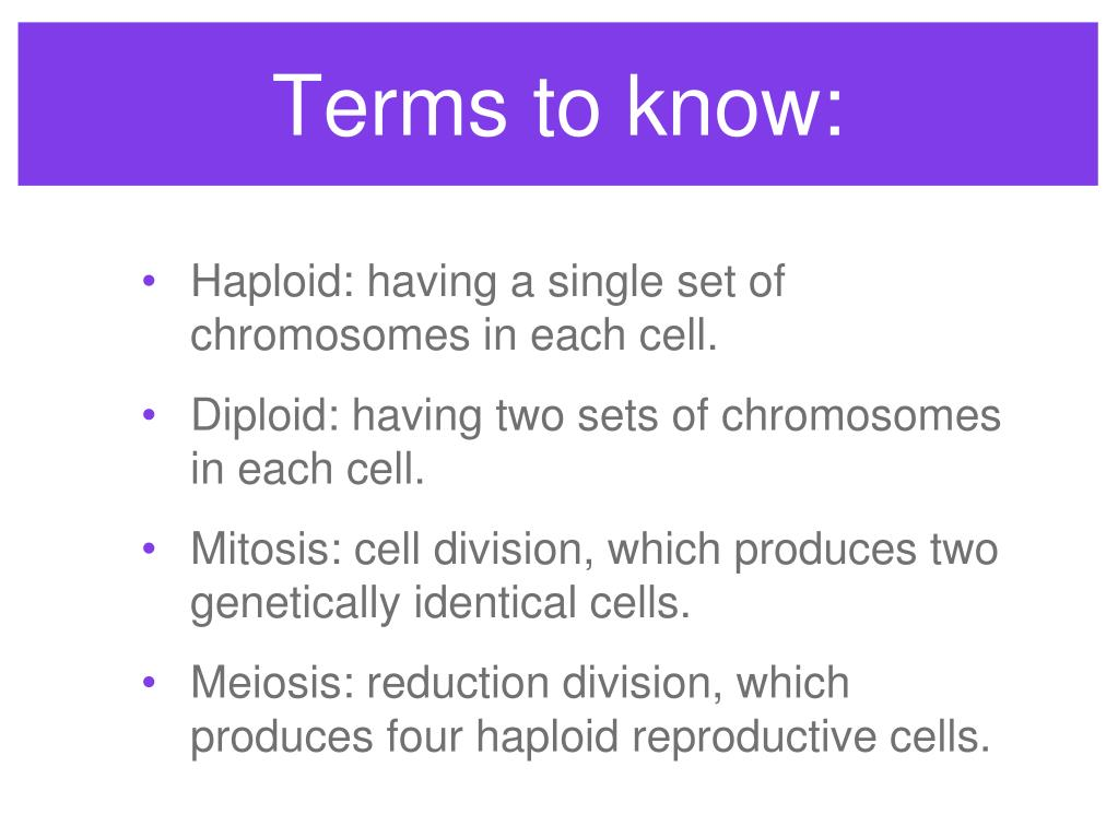 Terms to know: