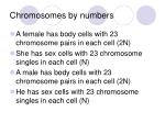 chromosomes by numbers5