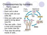 chromosomes by numbers6