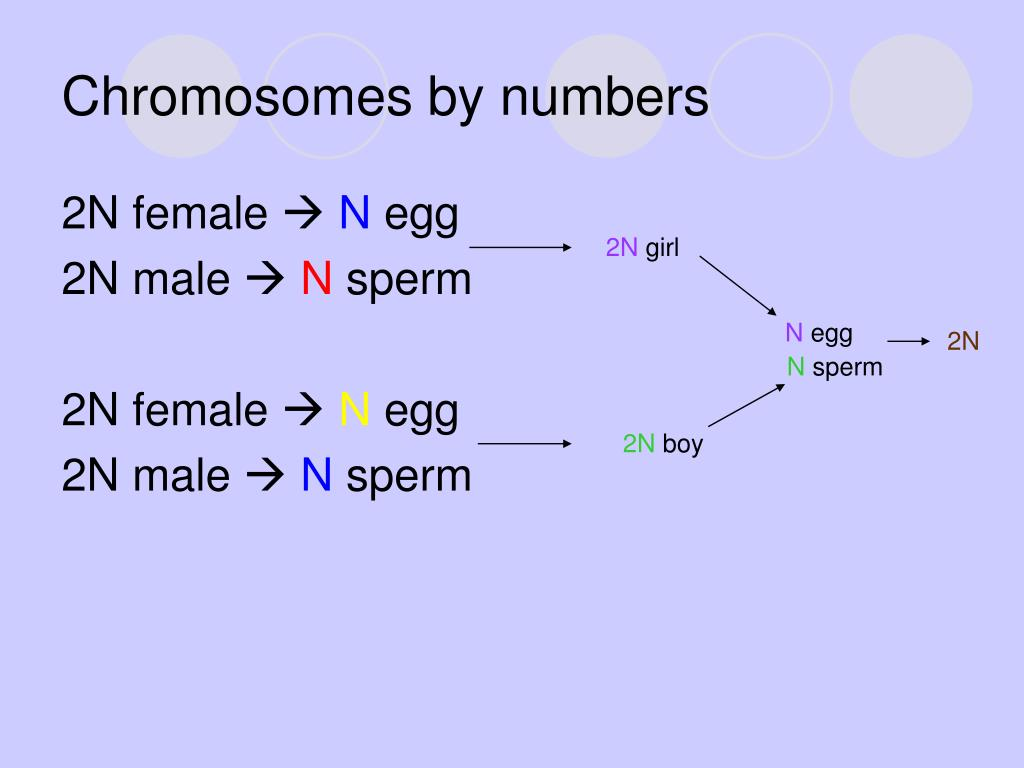 Chromosomes by numbers