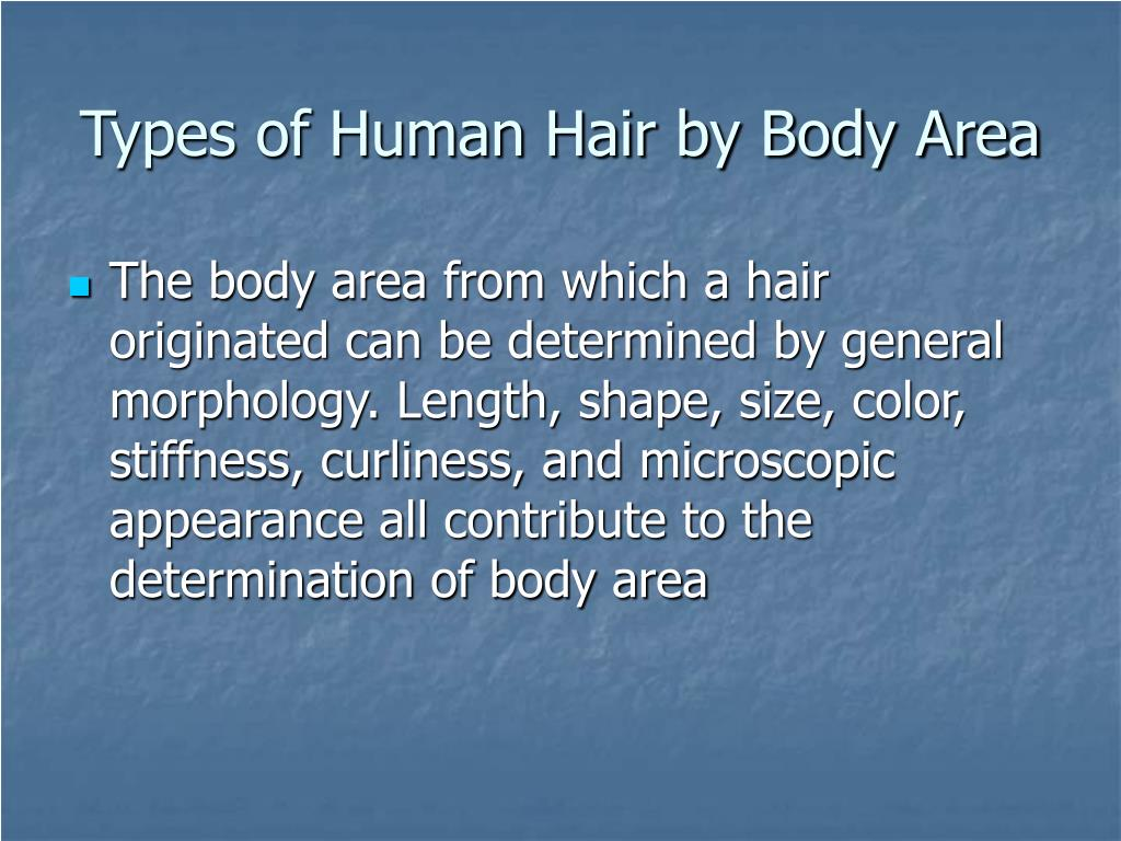 Types of Human Hair by Body Area