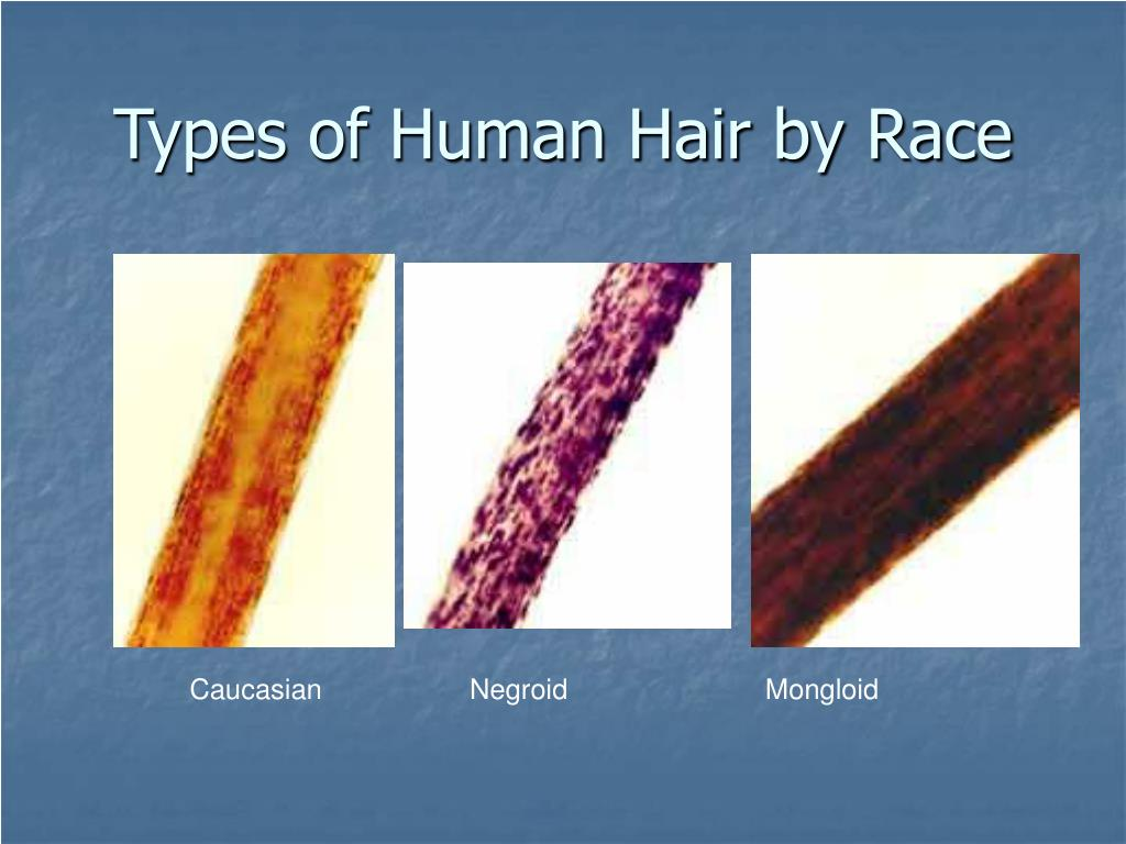 Types of Human Hair by Race