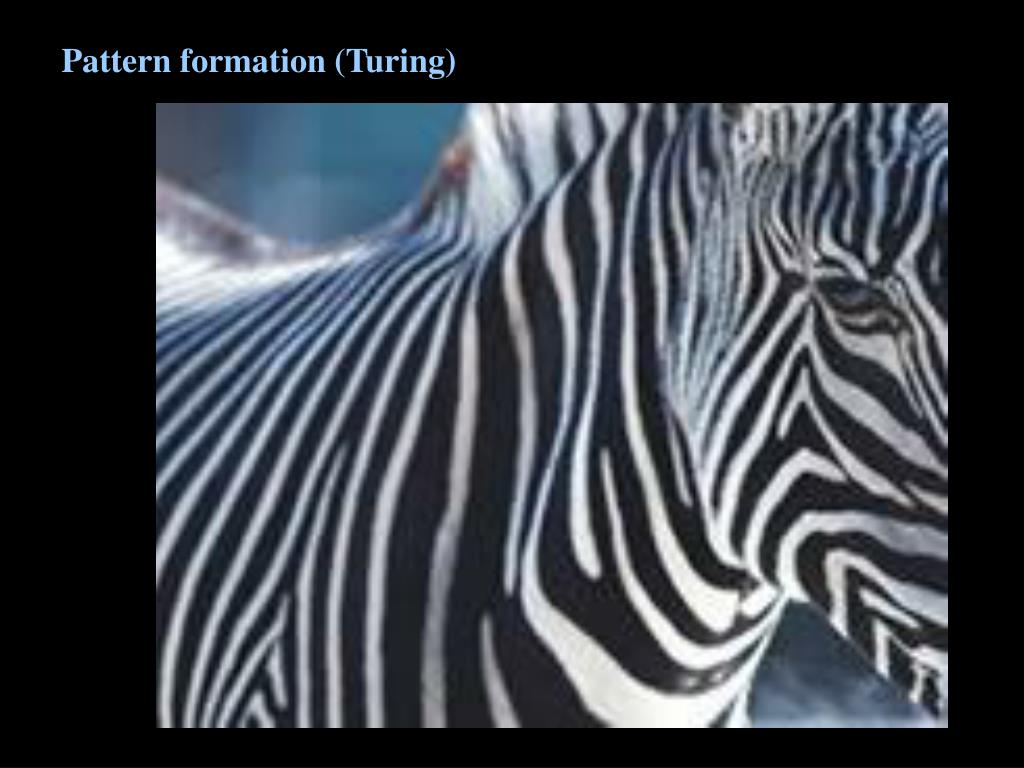 Pattern formation (Turing)