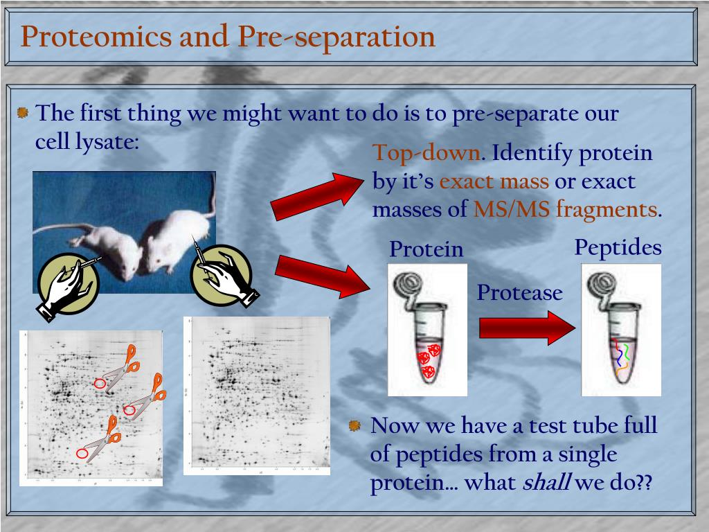 Proteomics and Pre-separation