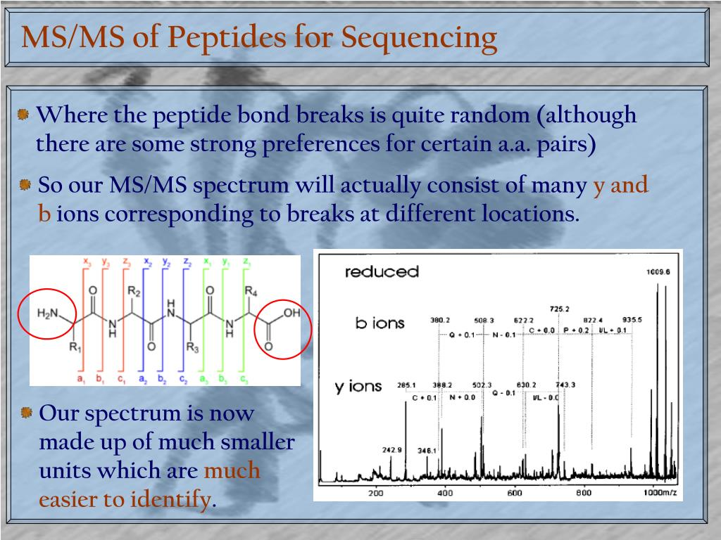 MS/MS of Peptides for Sequencing