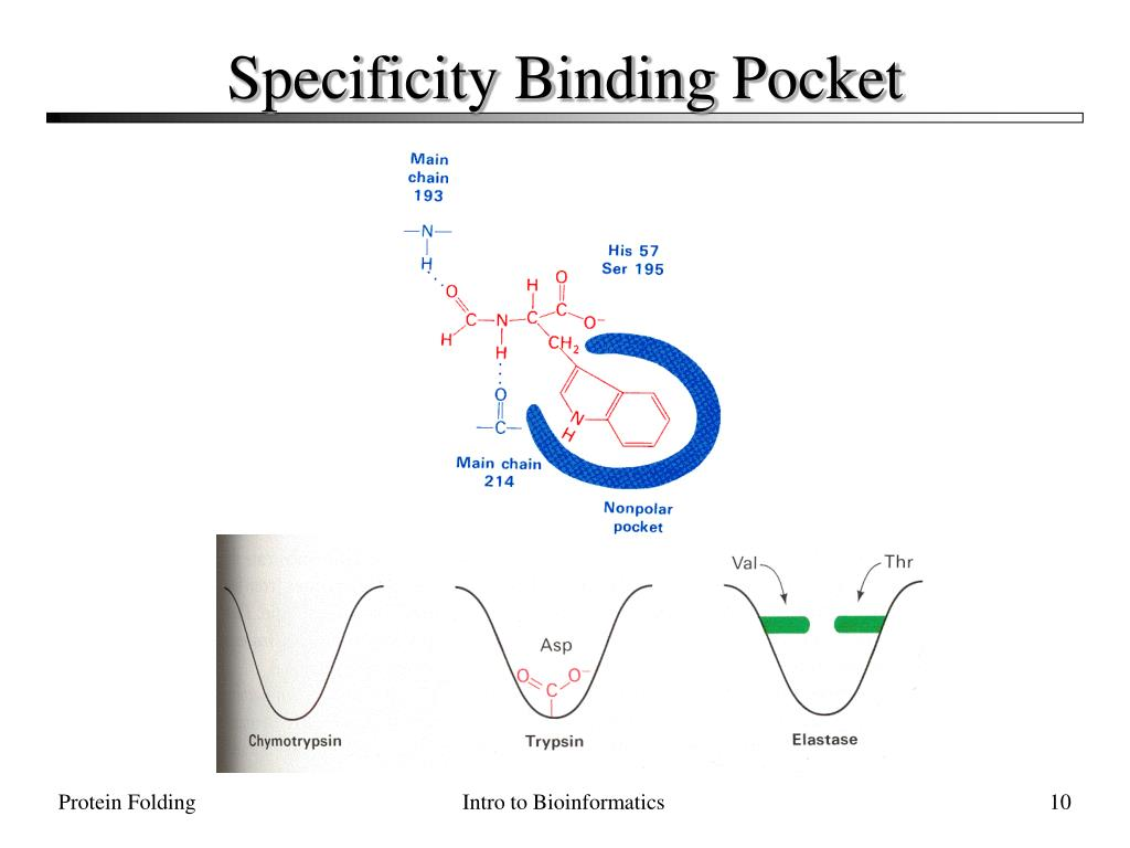 Specificity Binding Pocket