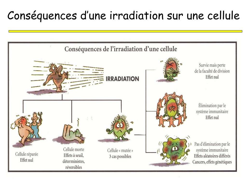 Conséquences d'une irradiation sur une cellule