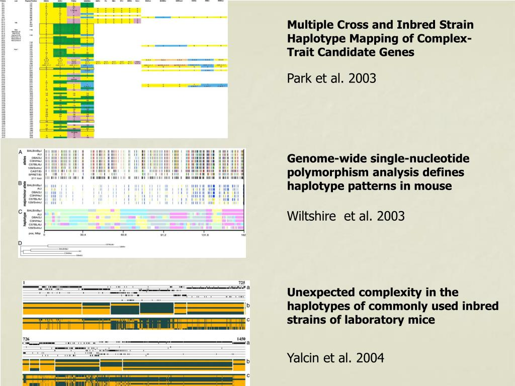 Genome-wide single-nucleotide polymorphism analysis defines haplotype patterns in mouse