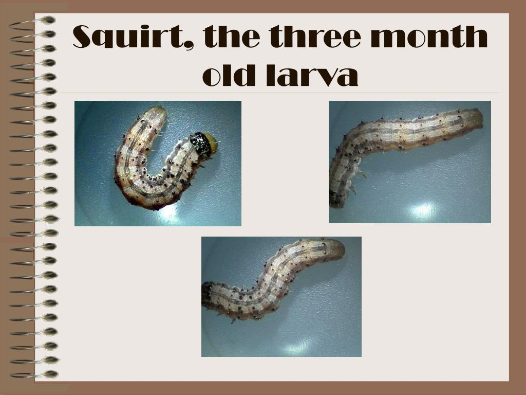 Squirt, the three month old larva