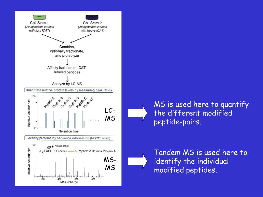 MS is used here to quantify the different modified peptide-pairs.