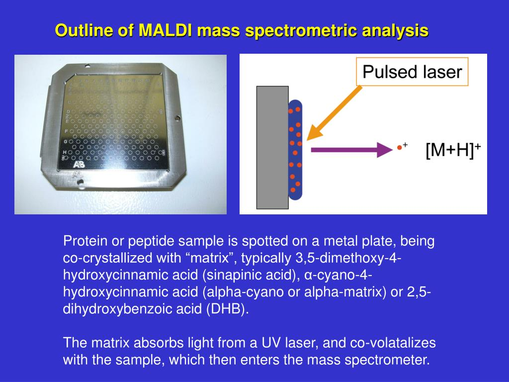 Outline of MALDI mass spectrometric analysis