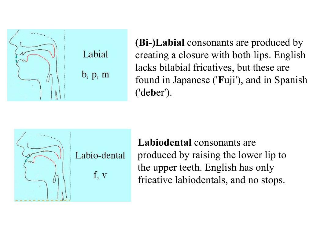 (Bi-)Labial
