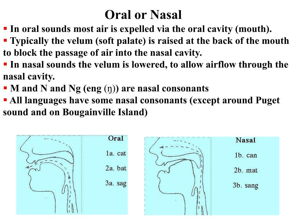 Oral or Nasal