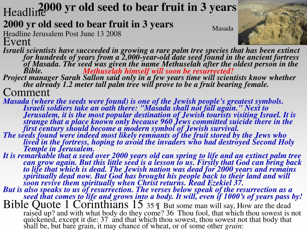 2000 yr old seed to bear fruit in 3 years