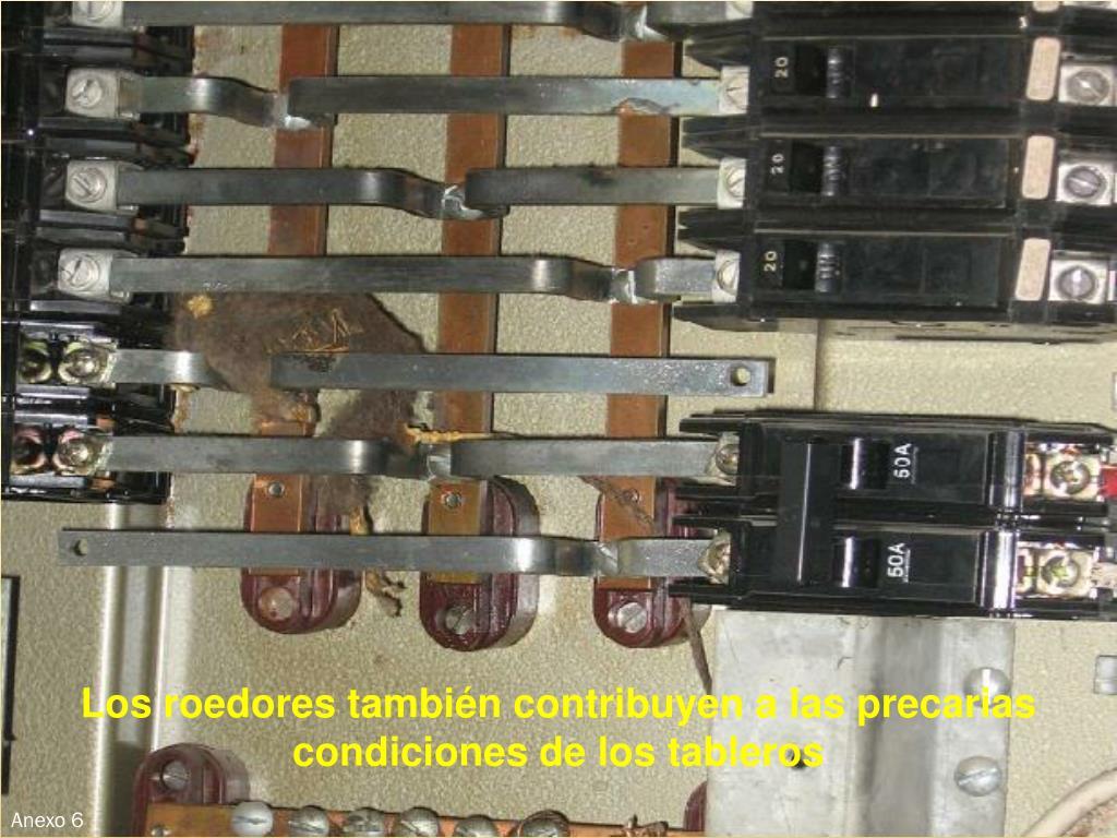 Los roedores también contribuyen a las precarias condiciones de los tableros