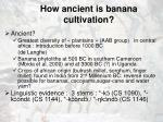 how ancient is banana cultivation