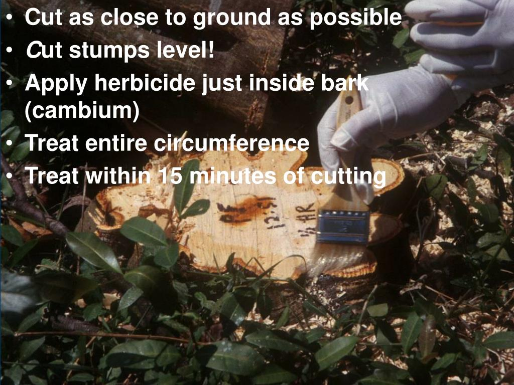 Cut as close to ground as possible