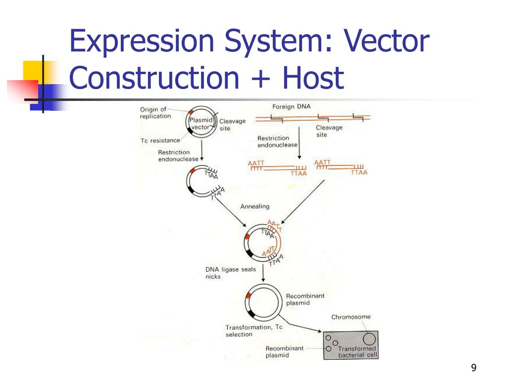Expression System: Vector Construction + Host