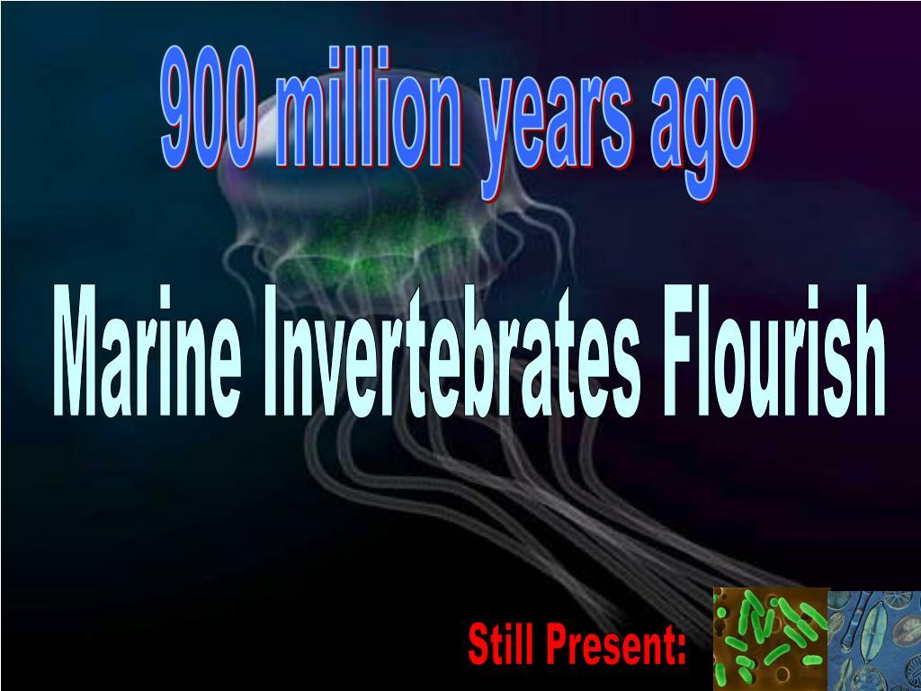 900 million years ago