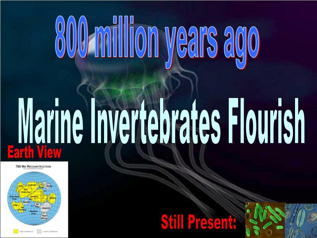 800 million years ago