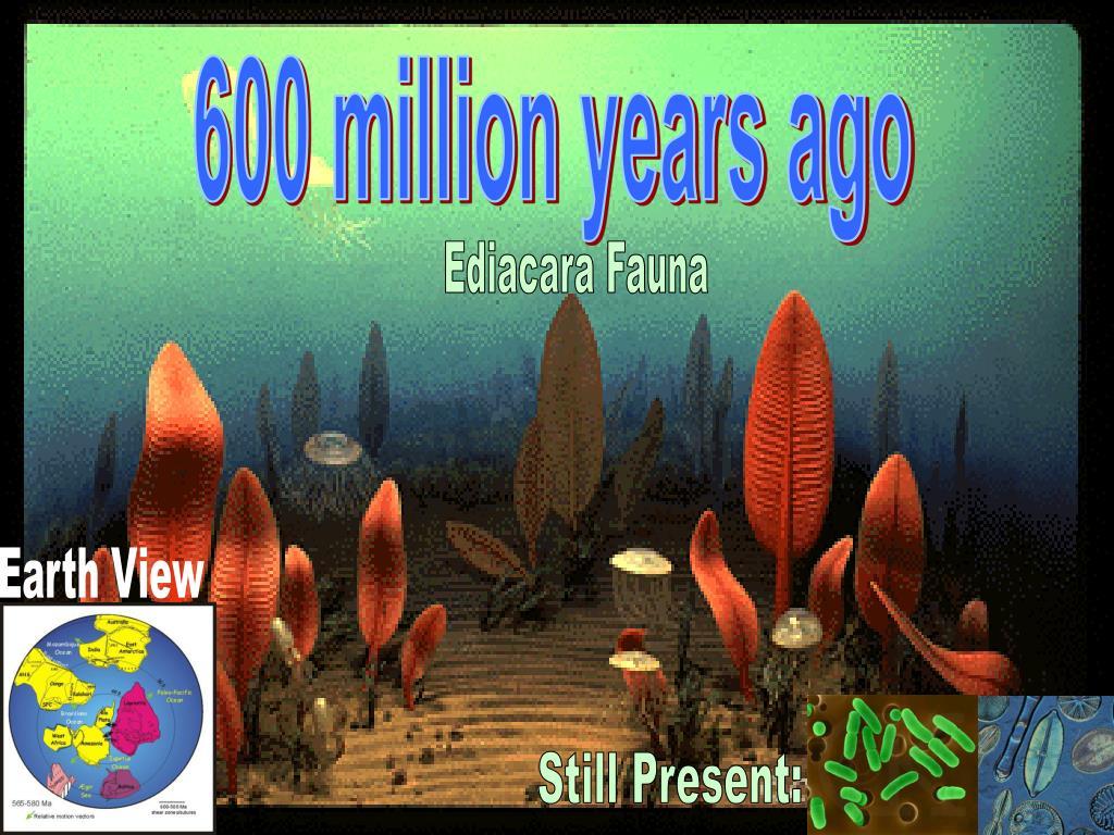 600 million years ago