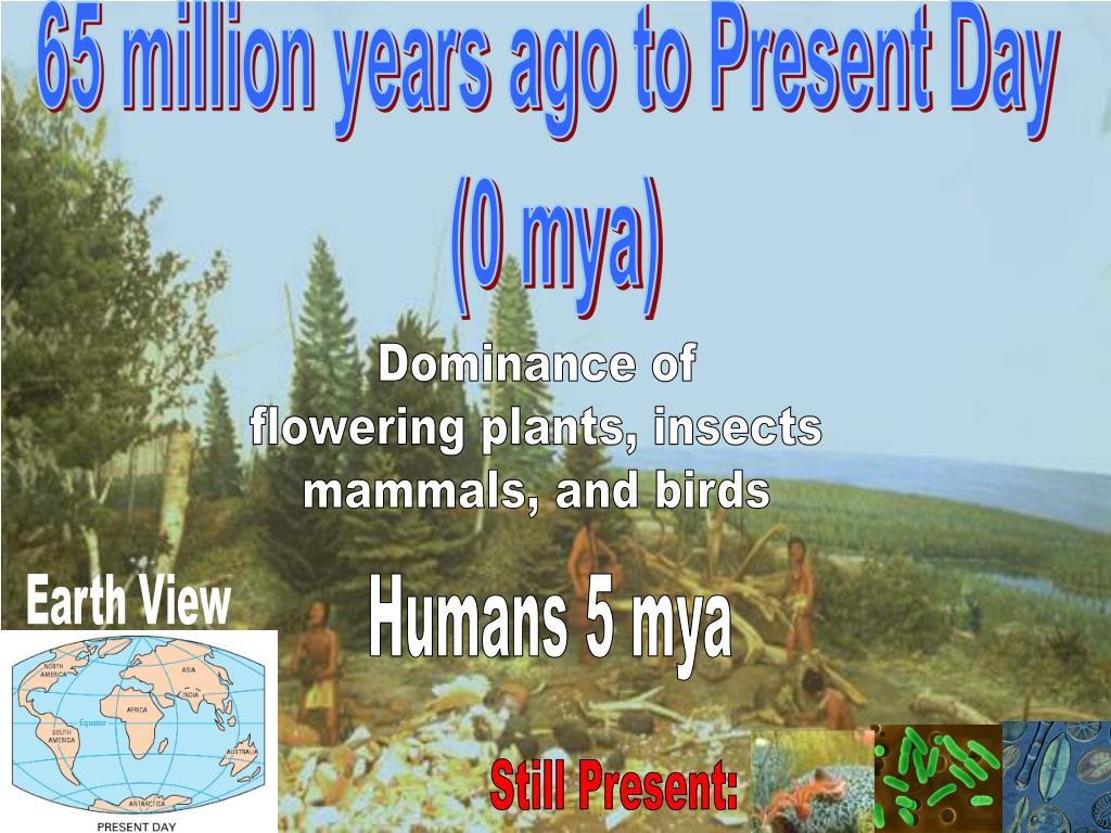 65 million years ago to Present Day