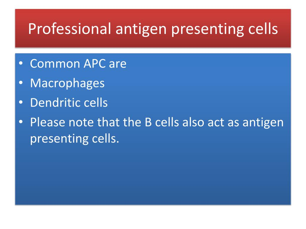 Professional antigen presenting cells
