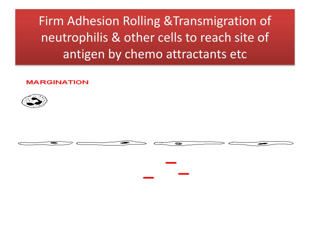 Firm Adhesion Rolling &Transmigration of neutrophilis & other cells to reach site of antigen by chemo attractants etc
