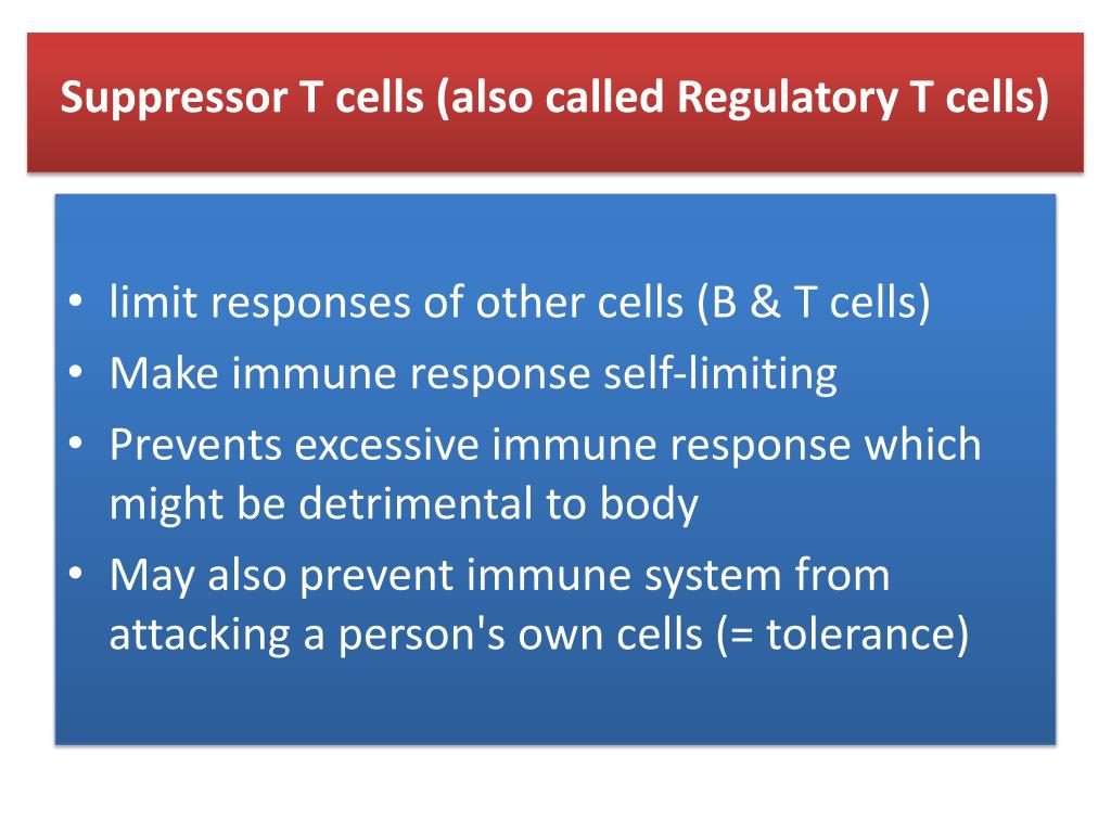 Suppressor T cells (also called Regulatory T cells)