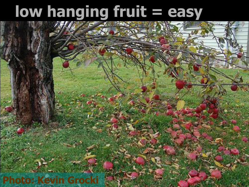 low hanging fruit = easy