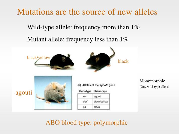Mutations are the source of new alleles