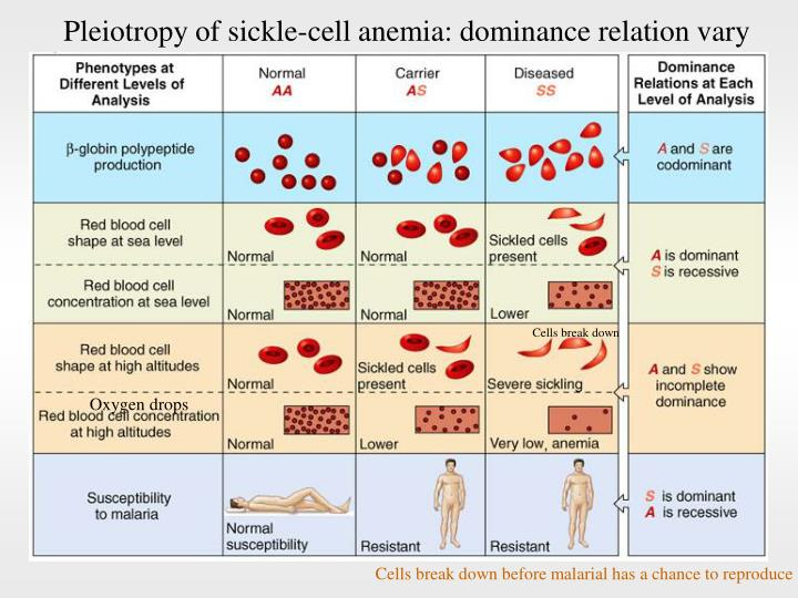 Pleiotropy of sickle-cell anemia: dominance relation vary