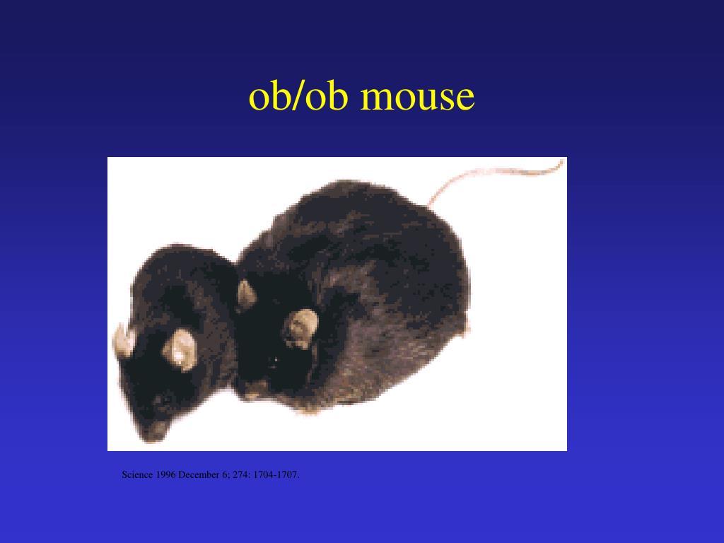 ob/ob mouse