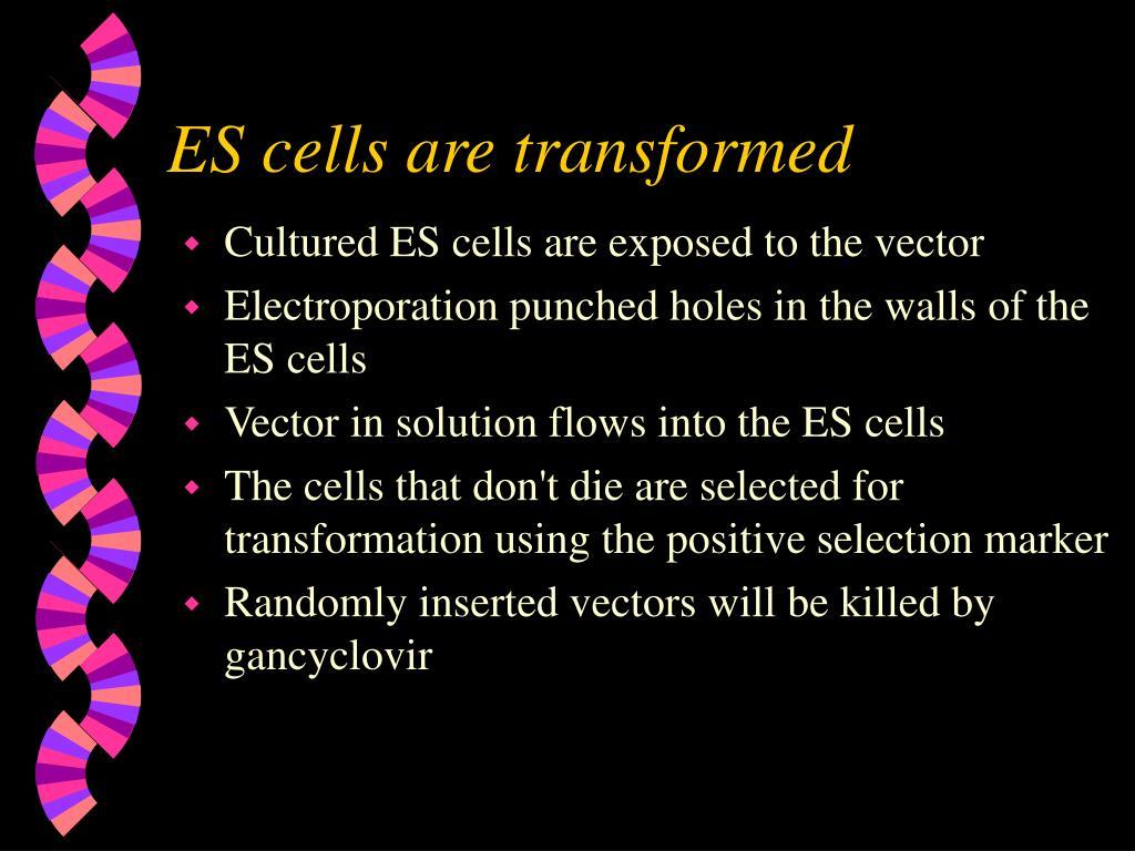 ES cells are transformed