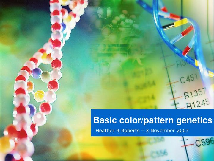 Basic color pattern genetics