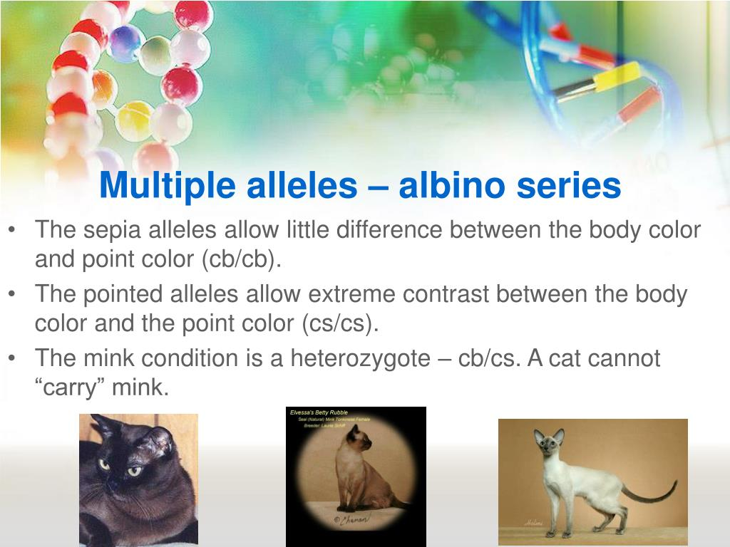 Multiple alleles – albino series