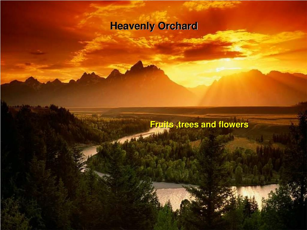 Heavenly Orchard