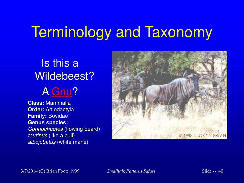 Terminology and Taxonomy