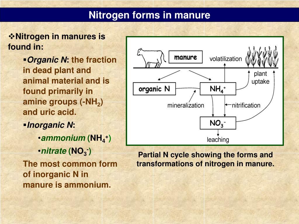 Nitrogen forms in manure