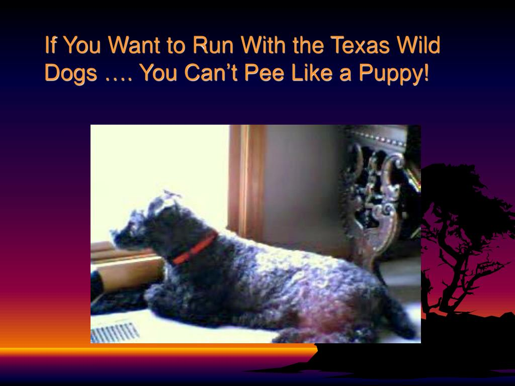 If You Want to Run With the Texas Wild Dogs …. You Can't Pee Like a Puppy!