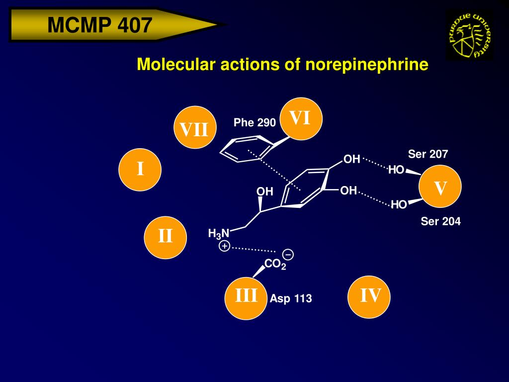 Molecular actions of norepinephrine