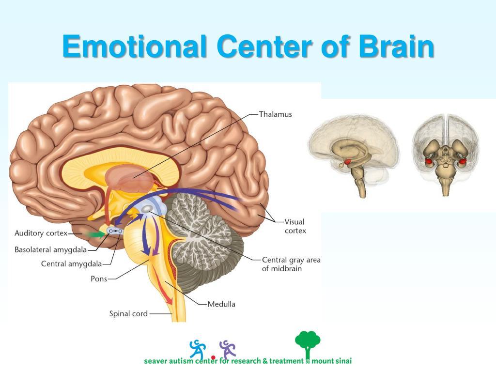 Emotional Center of Brain