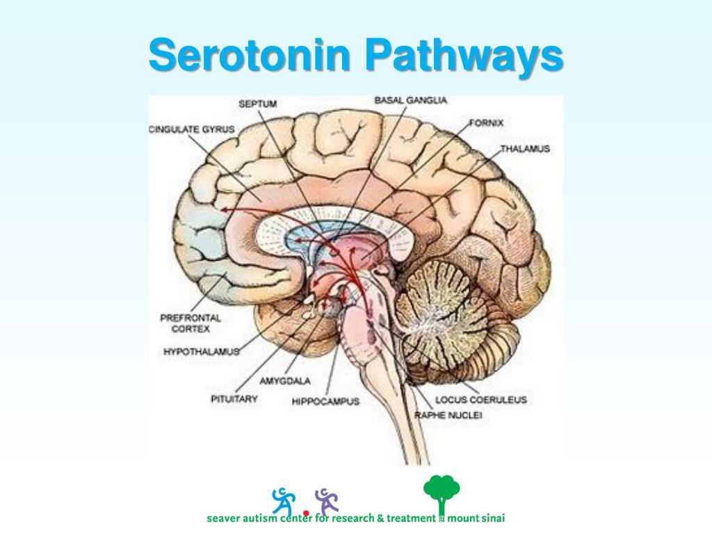 Serotonin Pathways