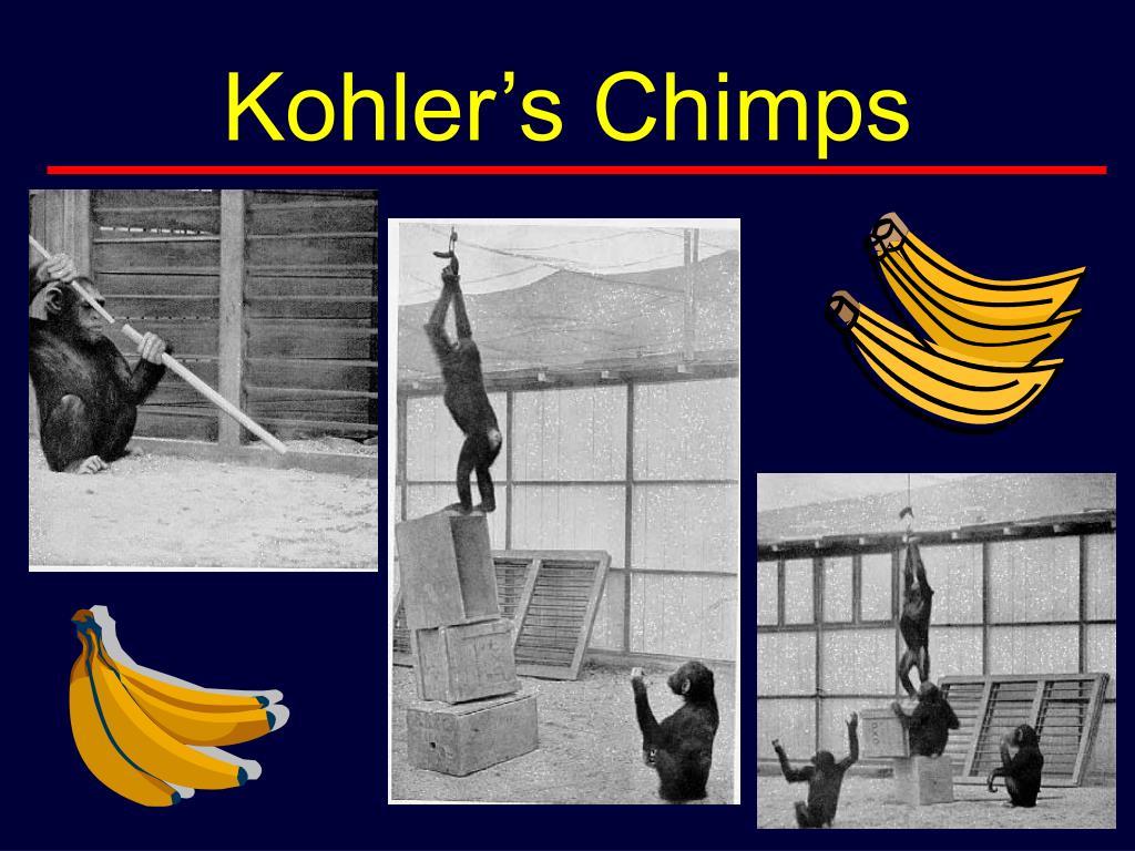 Kohler's Chimps