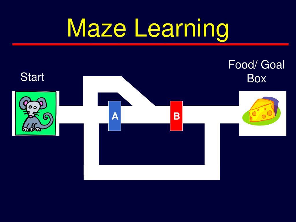 Maze Learning