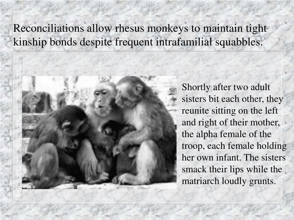 Reconciliations allow rhesus monkeys to maintain tight kinship bonds despite frequent intrafamilial squabbles.
