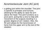 acromioclavicular joint ac joint