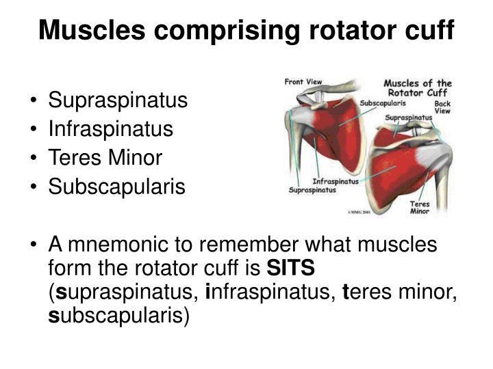 Muscles comprising rotator cuff