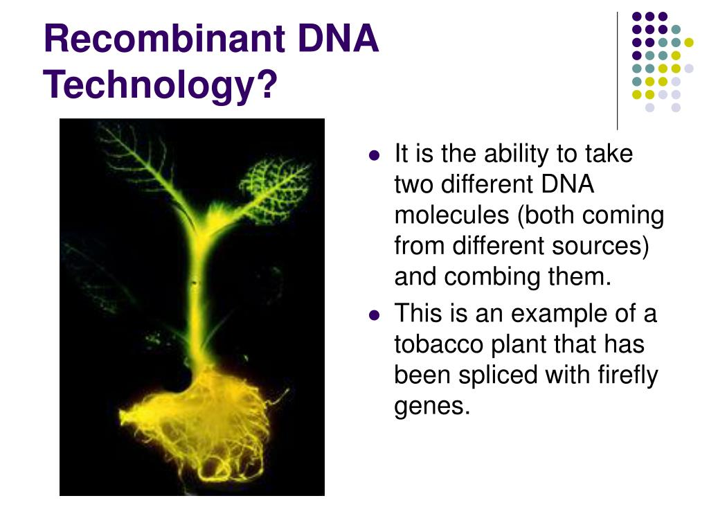 Recombinant DNA Technology?