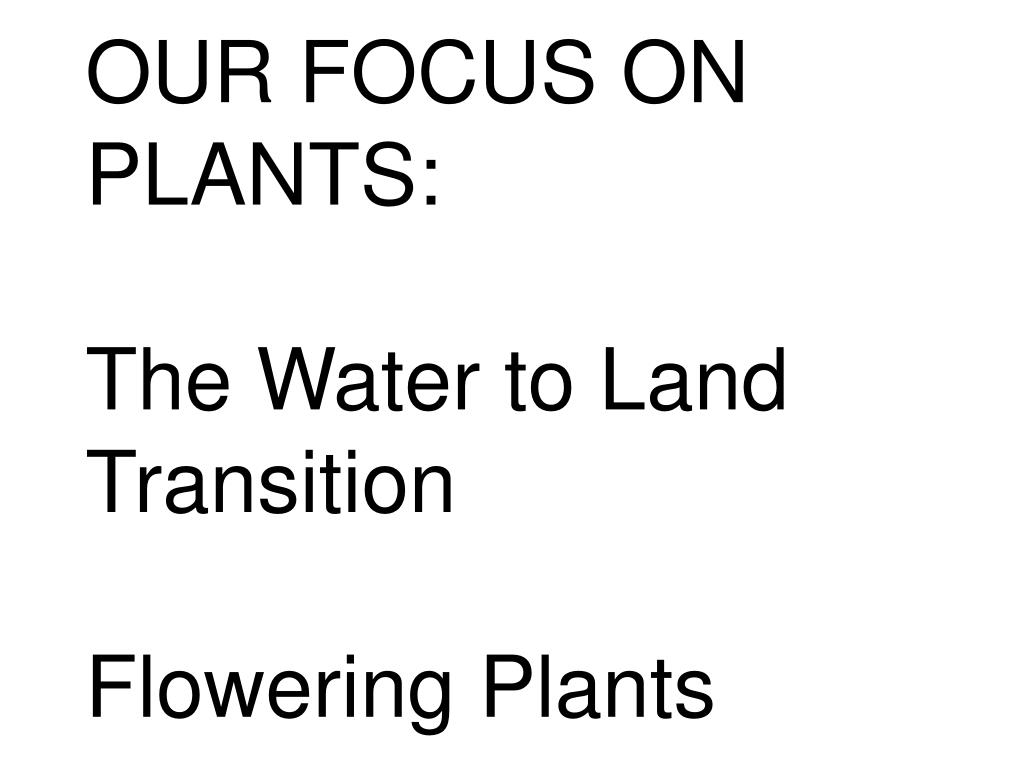 OUR FOCUS ON PLANTS: